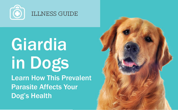 Food For Dogs With Chronic Diarrhea