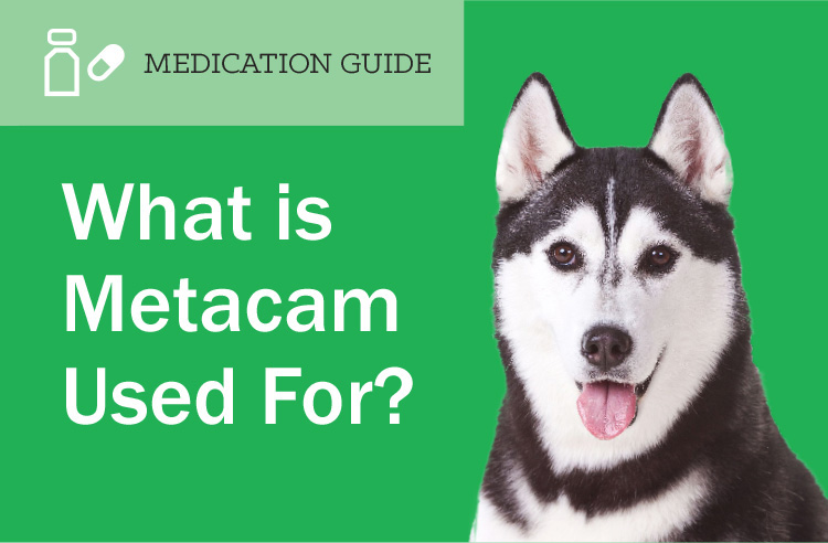 What Is Metacam Used For