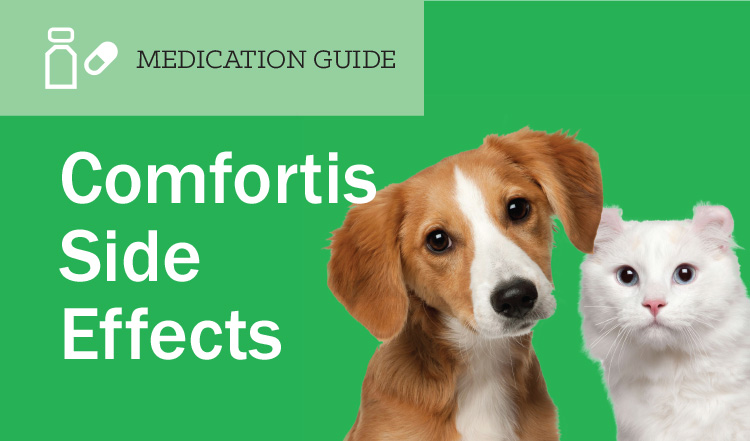 Comfortis Side Effects