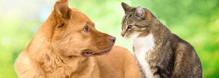 Prevetnion of Canine Flu