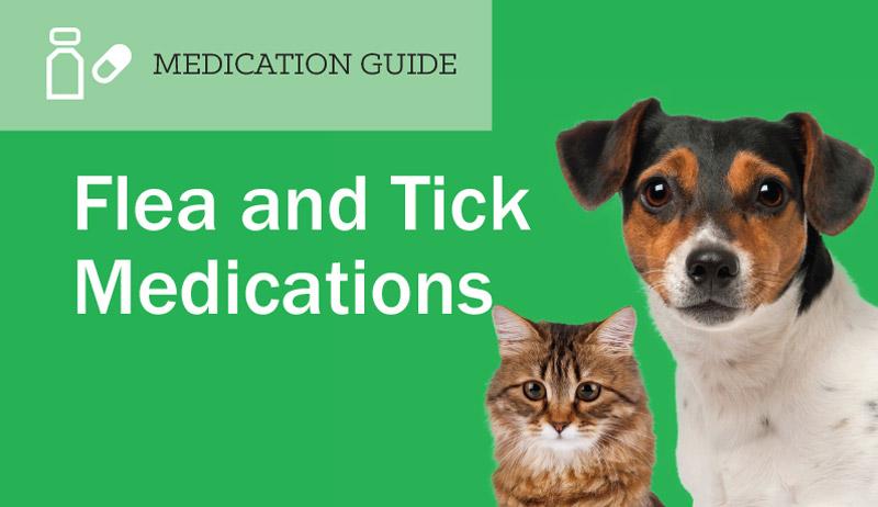 What is Feline Immunodeficiency Virus?