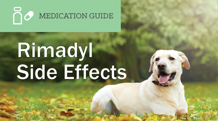 Lincocin For Dogs Side Effects