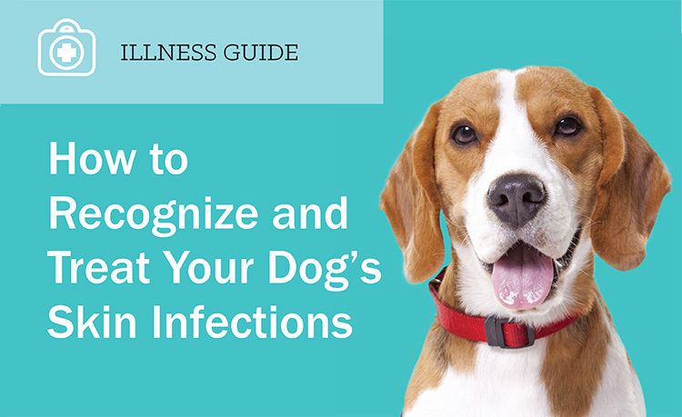 Male Dog Neutering  all you need to know  PetInformed