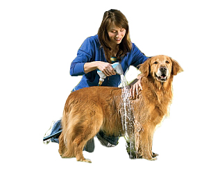 Bathing Your Pet