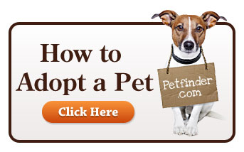 How to Adopt a Pet
