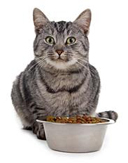 Organic Cat