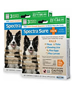 Spectra Sure 6 Month Green