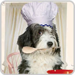 5 Easy Pet Recipes