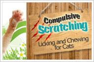 Cat Scratching Remedies