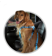 cruising car harness