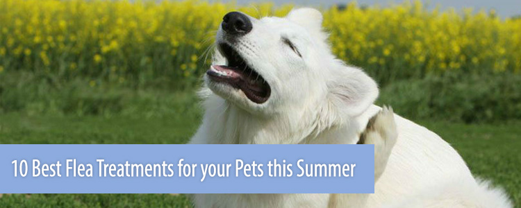 10 Best Flea Treatments for your Pets this Summer