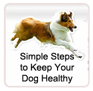 Simple Steps to Keep Your Dog Healthy