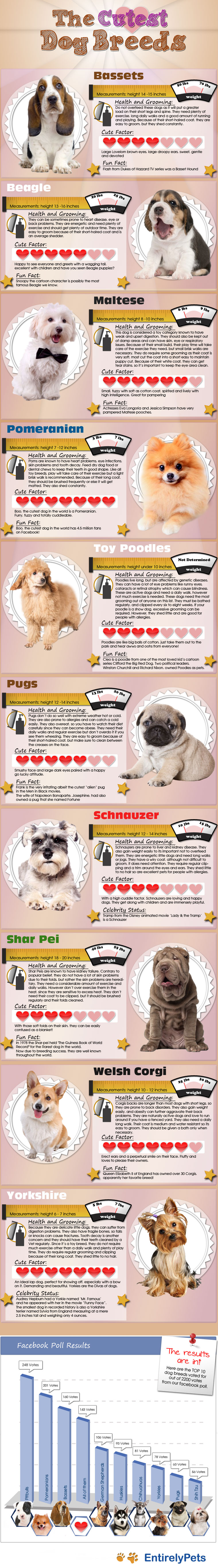 EntirelyPets rates the cutest dog breeds plus our facebook poll results