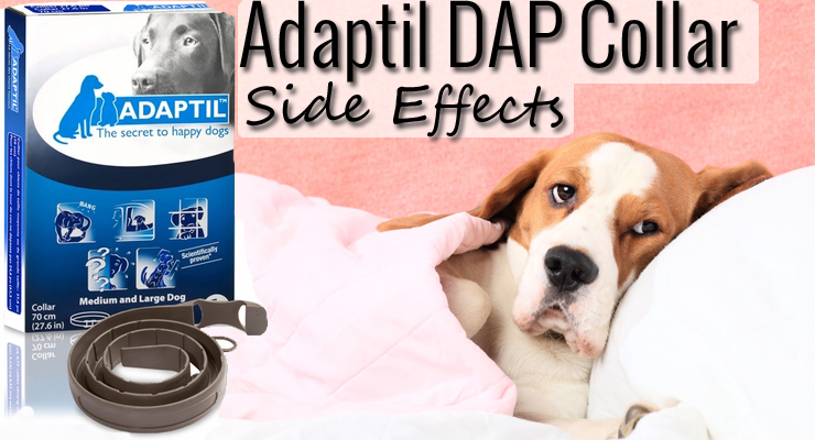 Dap Collar Side Effects Entirelypets