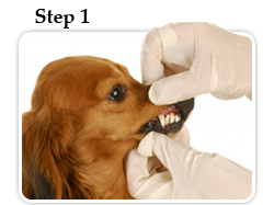 Dental exam for your pet