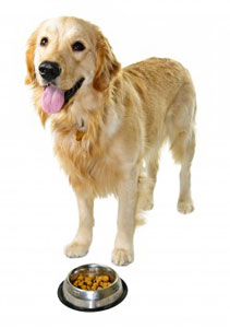 Organic dog food are healthy foods, which make a healthy dog!