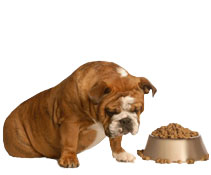 Organic dog food is healthier for dogs