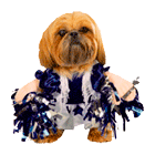 cheer leader dog