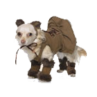 NEW! Leg Avenue Dog Costumes 3 PC. Cuddly Lion Pup Costume
