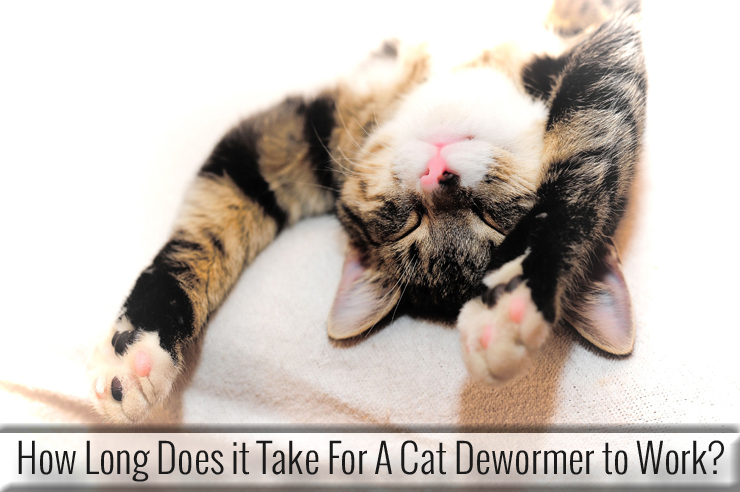 How Long Does It Take For A Cat Dewormer To Work