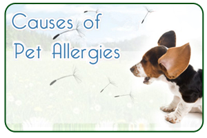 Causes of Pet Allergies