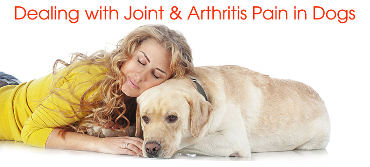Dealing with Joint and Arthritis Pains for Dogs