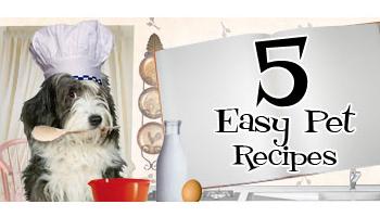 5 Easy Pet Recipes