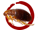 Kills Fleas