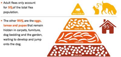 Flea Pyramid