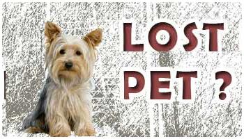 Lost Pet?
