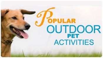 Popular Outdoor Pet Activities