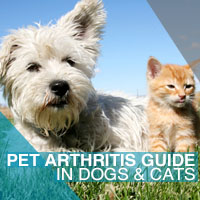 pet arthritis guide for dogs cats entirelypets. Black Bedroom Furniture Sets. Home Design Ideas