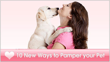 Pampering Your Pet