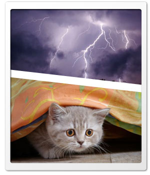 Pets fear of thunderstorms or fireworks