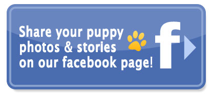 Share your puppy photos & stories on our facebook page!