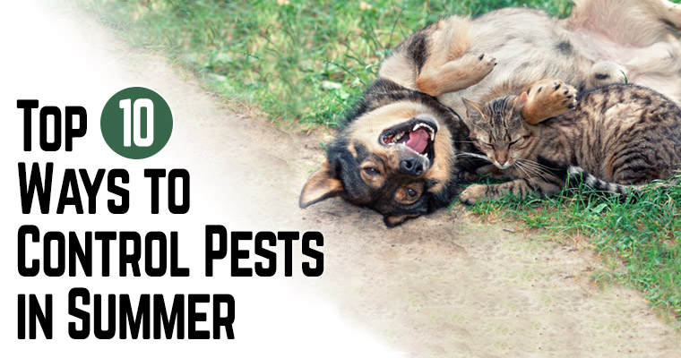 Natural Ways To Keep Fleas And Ticks Off Dog