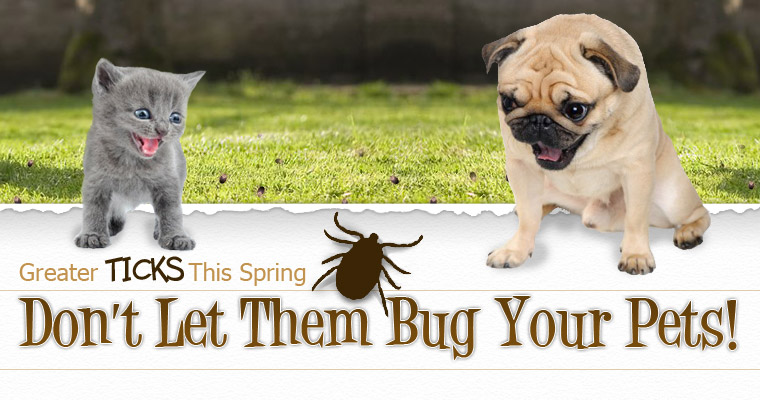 Don't Let Ticks Bug Your Pets