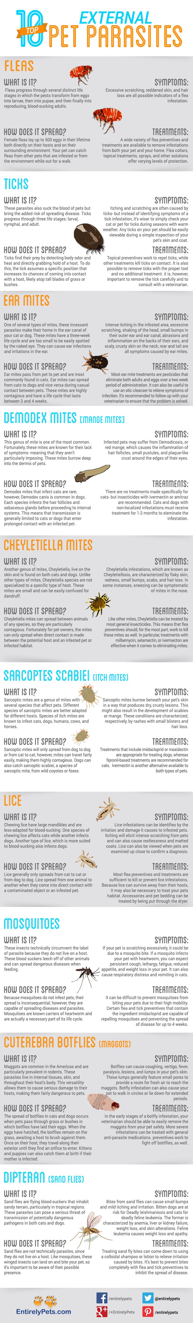 Deadly Parasite List Infographic