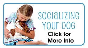 socializing your pet