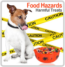 Food Hazards