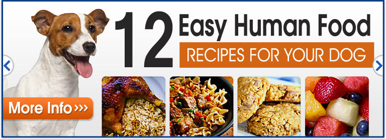 12 Easy Human Food Recipes For Your Dog