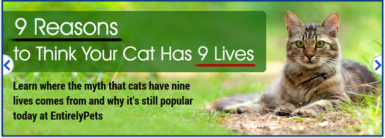 9 Reasons to Think Your Cat Has 9 Lives
