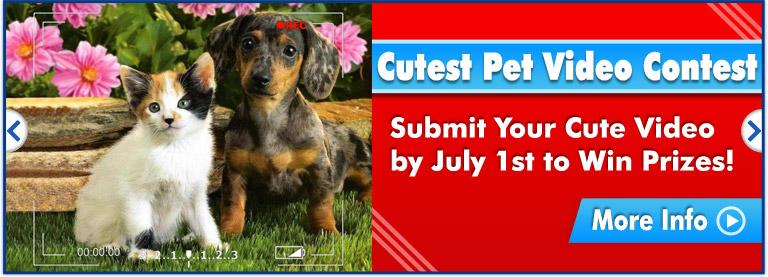 Cutest Pet Video Contest