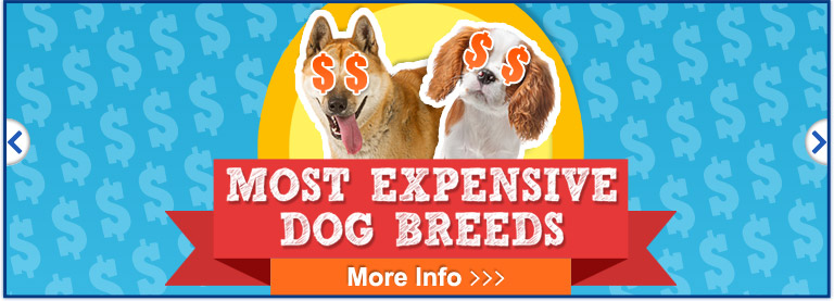 Expensive Dog Breeds