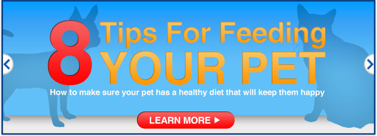 8 Tips Feeding Your Pet