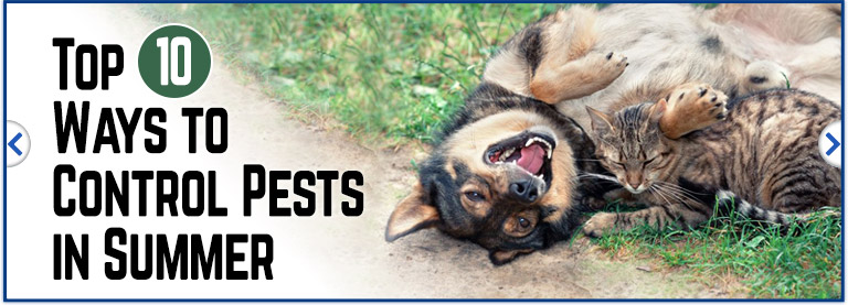 Help eliminate pests that bother your pets this summer