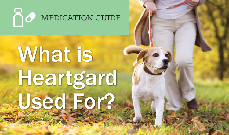 What is Heartgard Used For?