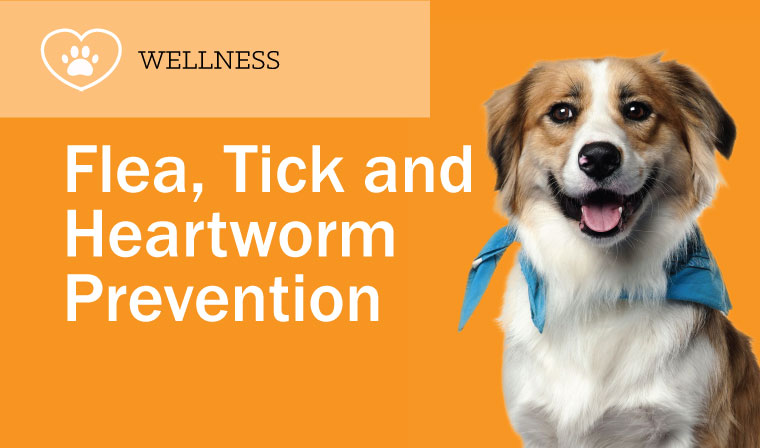 Flea, Tick and Heartworm Prevention