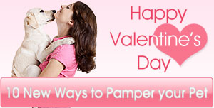 Happy Valentine's Day with Top 10 Ways to Pamper your Pet