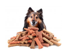 Organic foods are healthier for dogs